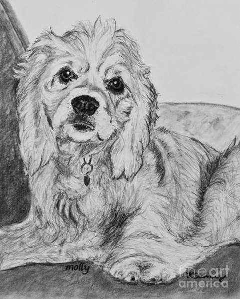 Drawing - Young Cocker Spaniel by Kate Sumners