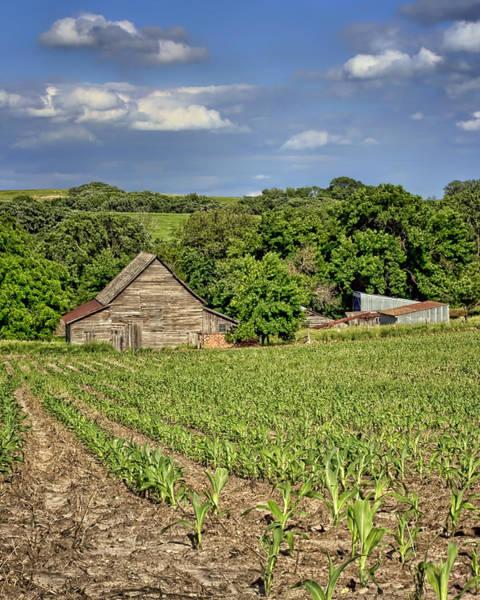 Nebraska Landscape Photograph - Young Corn by Nikolyn McDonald
