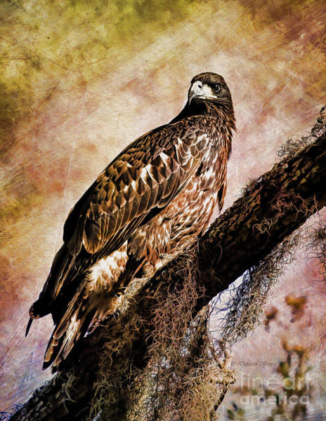 Photograph - Young Eagle Pose II by Deborah Benoit