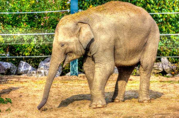 Wall Art - Photograph - Young Elephant by Pati Photography