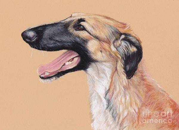 Russian Wolfhound Drawing - Young Female Borzoi by Charlotte Yealey