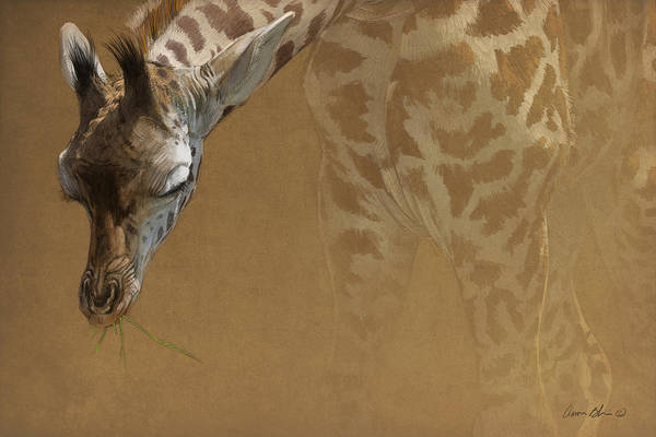Wall Art - Digital Art - Young Giraffe by Aaron Blaise
