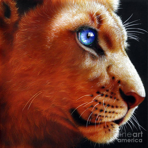 Wall Art - Painting - Young Lion by Jurek Zamoyski