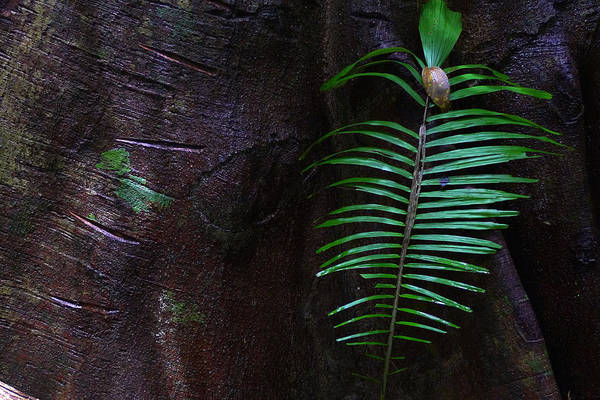 Palm Leaf Against Tree Art Print