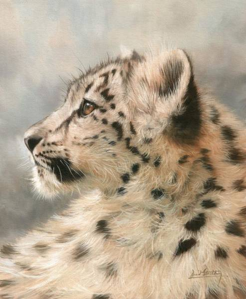 Snow Leopard Wall Art - Painting - Young Snow Leopard by David Stribbling