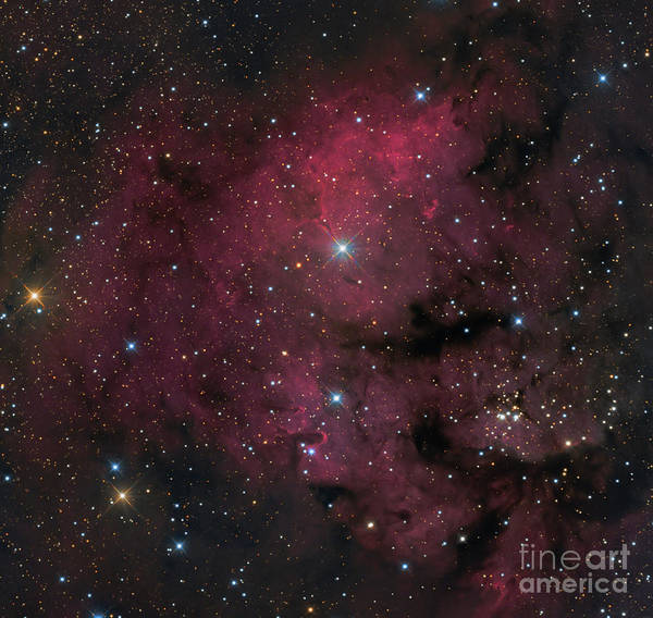Photograph - Young Star-forming Complex Ngc 7822 by Michael Miller