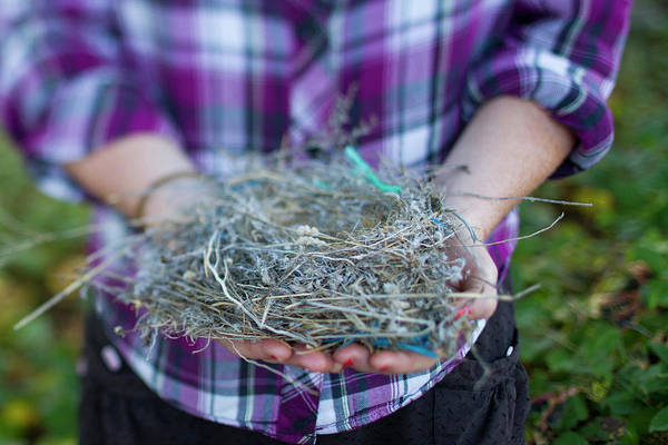 Empty Nest Wall Art - Photograph - Young Woman Holding A Birds Nest by Justin Bailie