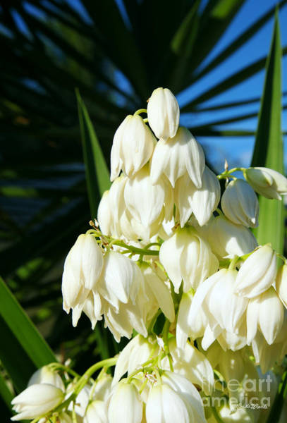 Yucca Palm Photograph - Yucca And Palm by Michelle Constantine