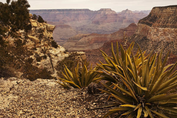 Photograph - Yucca At The Grand Canyon by Lee Kirchhevel