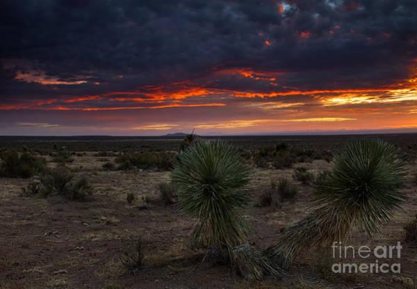 Yucca Elata Wall Art - Photograph - Yucca Sunset by Mike  Dawson