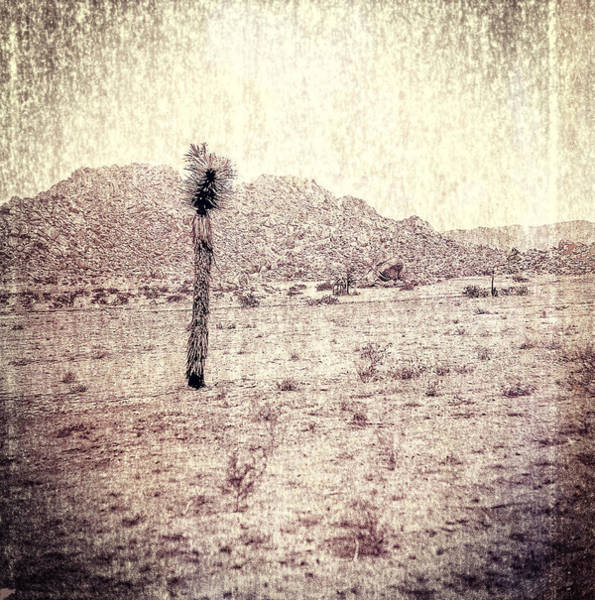 Yucca Plants Photograph - Yucca Tree In Desert by Yo Pedro