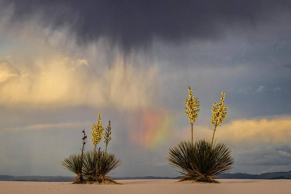 Horizontal Photograph - Yuccas, Rainbow And Virga by Don Smith