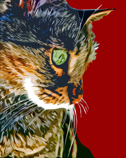 Wall Art - Photograph - Yuki Cat by David G Paul