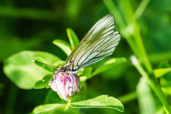 Snout Butterfly Photograph - Yummy by Alexander Senin