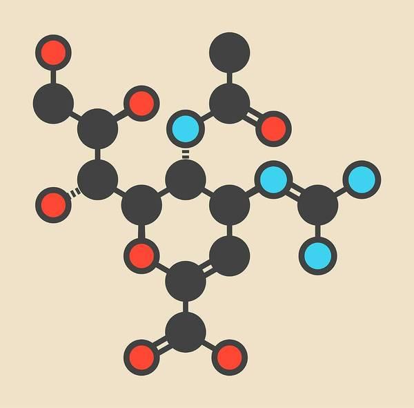 Neuraminidase Photograph - Zanamivir Influenza Drug Molecule by Molekuul
