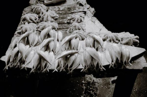 Photograph - Zanzibar Fish by Shaun Higson