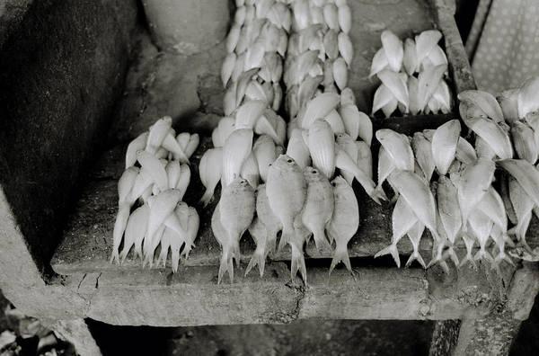 Photograph - Zanzibar Seafood by Shaun Higson