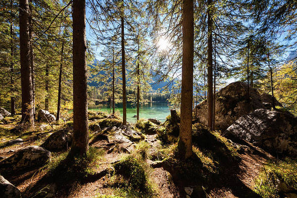 Sunlight Photograph - Zauberwald In Autumn by Jorg Greuel