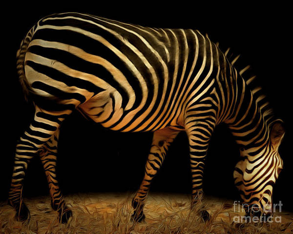 Photograph - Zebra 20150210brun by Wingsdomain Art and Photography