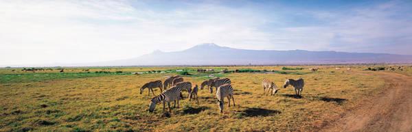 Mount Kenya Photograph - Zebra Amboseli Kenya by Panoramic Images
