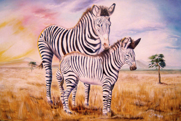 Zebra And Foal Art Print