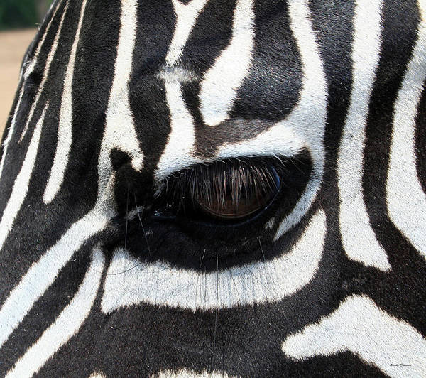 Wall Art - Photograph - Zebra Eye by Linda Sannuti