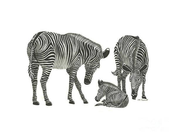 Drawing - Zebra Family by E B Schmidt