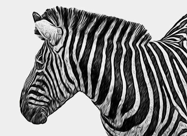 Wall Art - Painting - Zebra - Happened At The Zoo by Jack Zulli