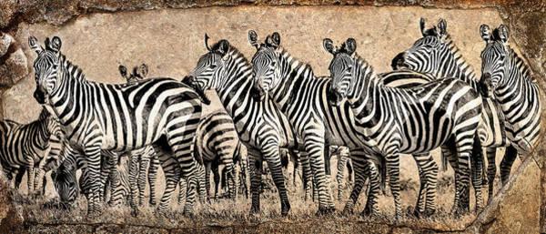Rhinocerus Photograph - Zebra Herd Rock Texture Blend by Mike Gaudaur