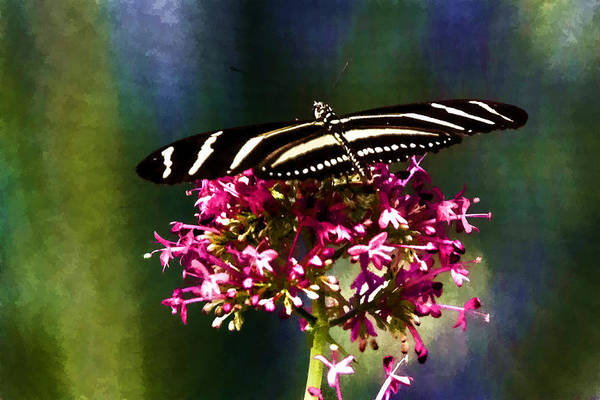 Digital Art - Zebra Longwing  by Photographic Art by Russel Ray Photos