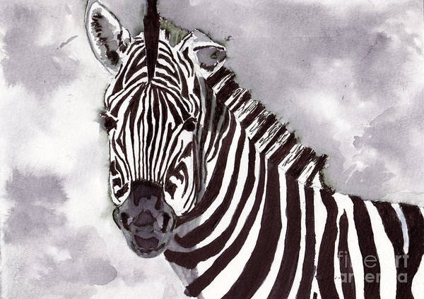 Black Wall Art - Painting - Zebra by Michael Rados