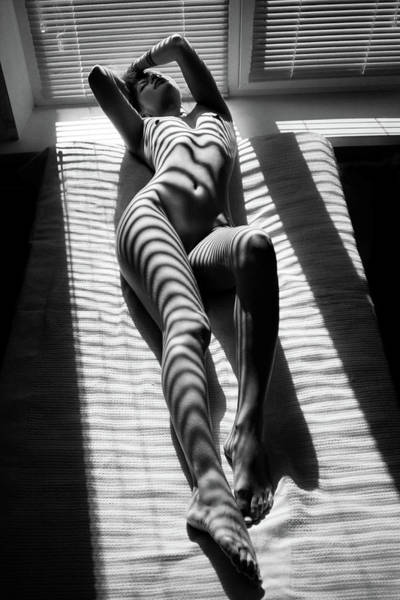 Bed Photograph - Zebra by Mikhail Faletkin