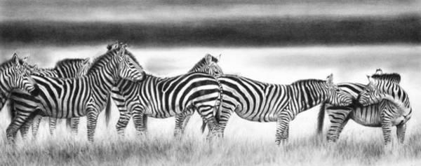 Drawing - Zebra Panarama by Peter Williams