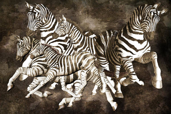 Wall Art - Digital Art - Zebras by Betsy Knapp