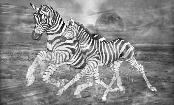 Full Moon Mixed Media - Zebras I Of II by Betsy Knapp