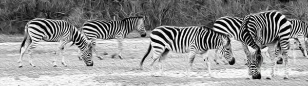 Oil Paint Photograph - Zebras by Rebecca Cozart