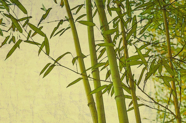 Traditional Home Digital Art - Zen Bamboo Abstract I by Marianne Campolongo