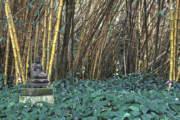 Allerton Garden Photograph - Zen Bamboo by Michael Yeager