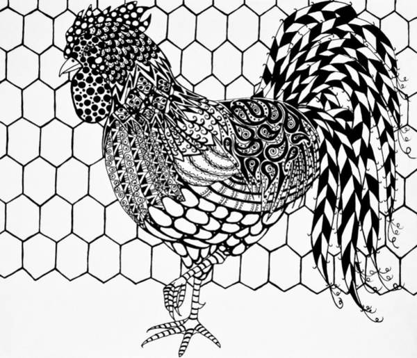 Drawing - Zentangle Rooster by Jani Freimann