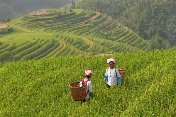 Mountain Range Photograph - Zhuang Minority Women Walk Through Rice by Diana Mayfield