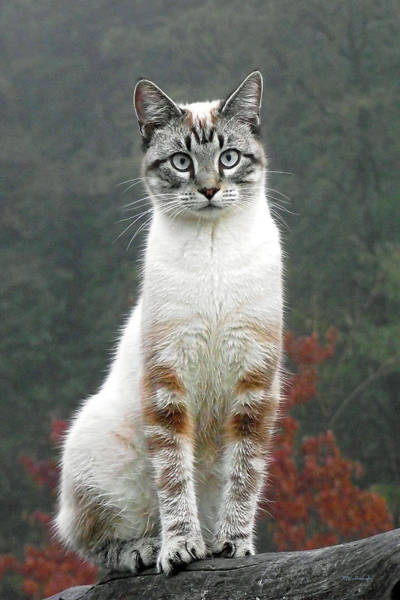 Photograph - Zing The Cat by Duane McCullough