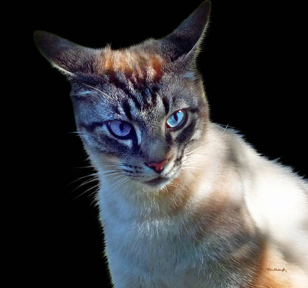 Photograph - Zing The Cat Thinking by Duane McCullough
