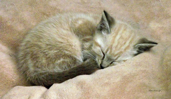 Photograph - Zing The Kitten 2 by Duane McCullough
