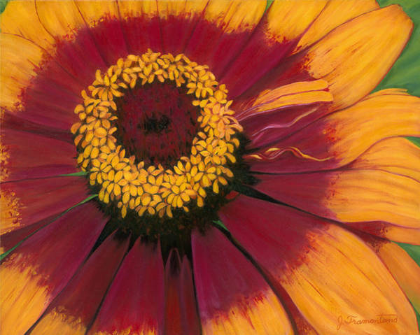 Painting - Zinnia by Jeannette Tramontano