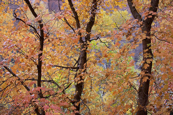 Christine Falls Photograph - Zion Autumn by Christine Hauber