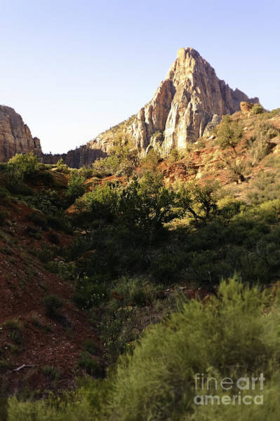 Photograph - Zion Landscape by Richard J Thompson