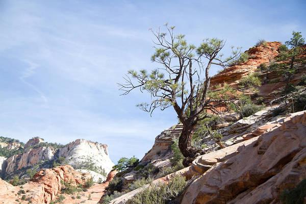 Photograph - Zion National Park 1 by Natalie Rotman Cote