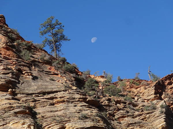 Wall Art - Photograph - Zion National Park Moonrise by Dan Sproul