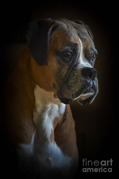 Photograph - Zoey by Ken Johnson