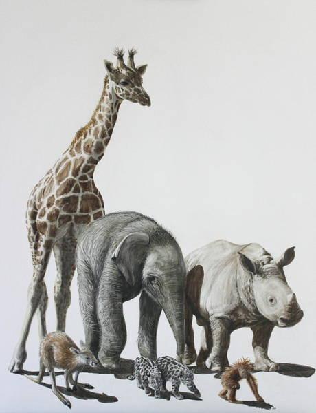 Kangaroo Drawing - Zoo Babies by Heather Ward